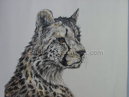 Tinted Portrait of a Young Cheetah