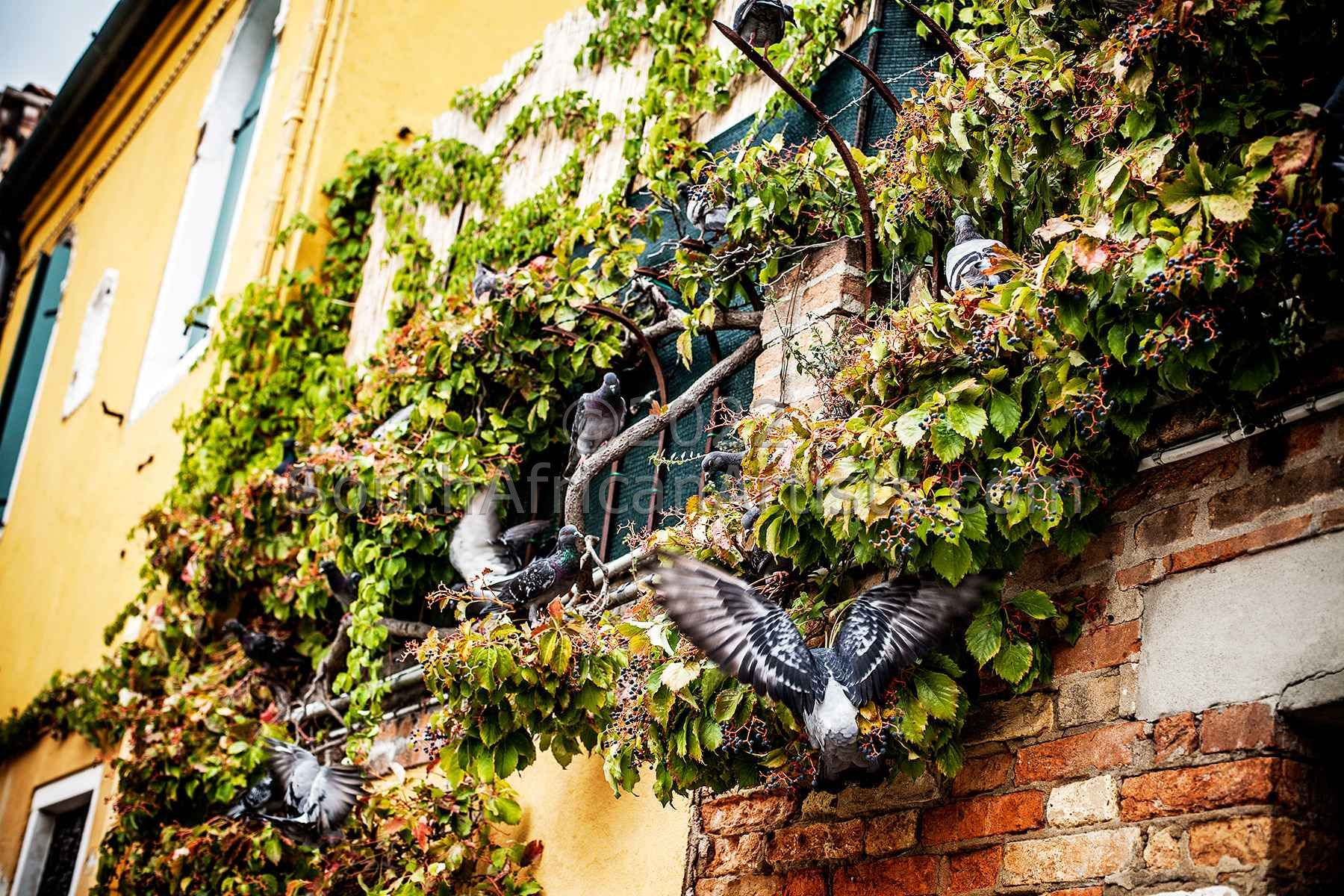 Venice, Birds