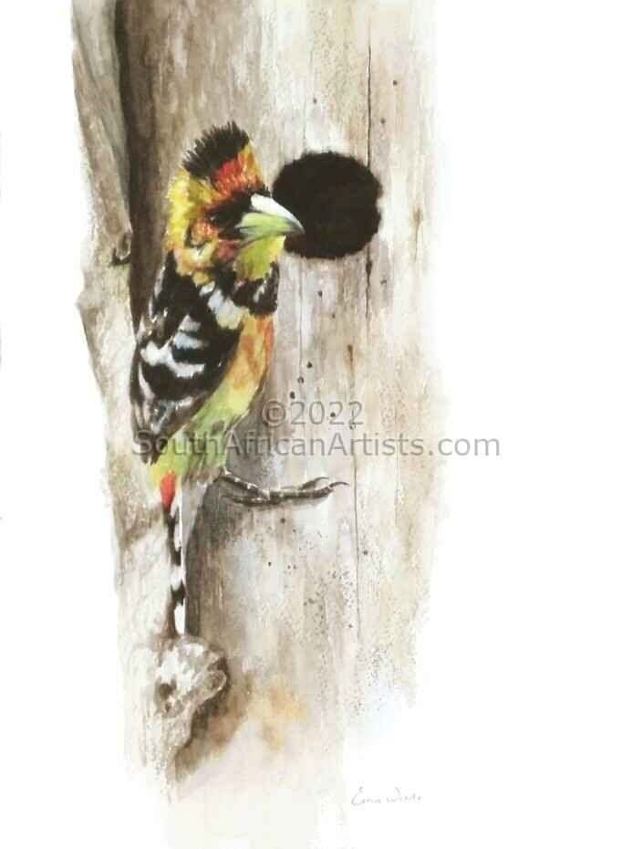 Crested Barbet at Nesting Hole