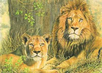 Lion and mate