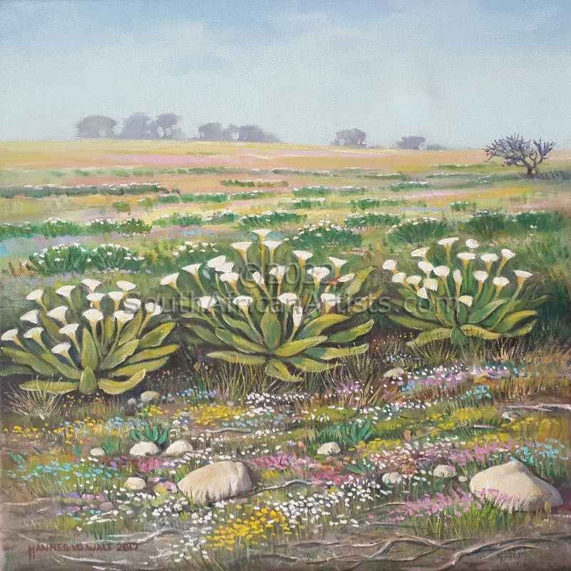 The Lilies of the Veld