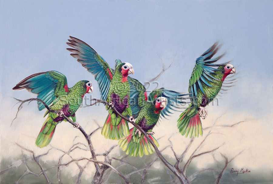 Wild and Free, Cuban Parrots