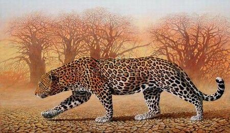 Dry Season - Leopard
