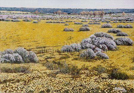 Spring Western Cape