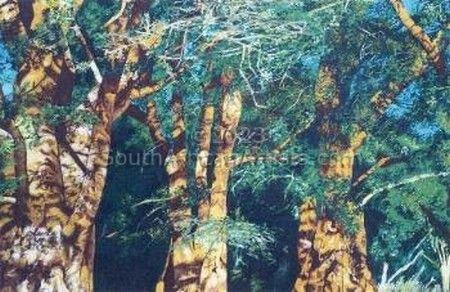 Zimbabwe Forest