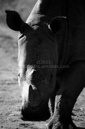 Rhino Stance