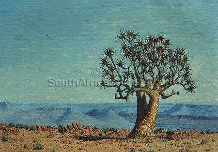 Quiver Tree Namibia
