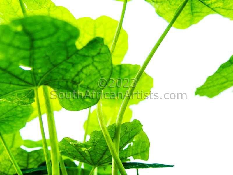 Under Leaf