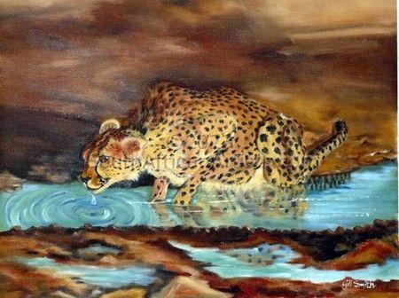Cheetah - Drinking