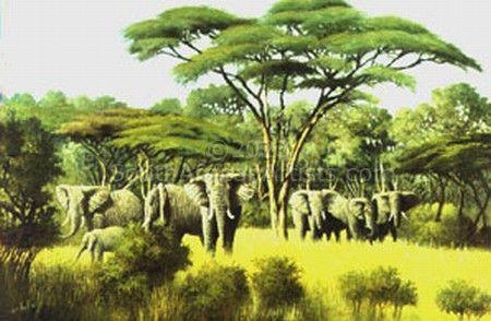 Moremi Herd