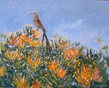 Sugarbird on Pincushions
