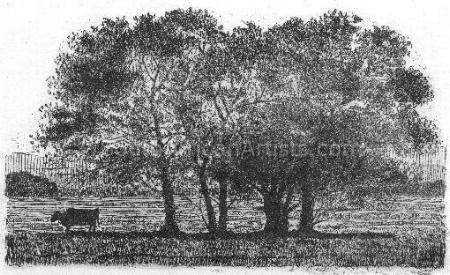Trees-Bome