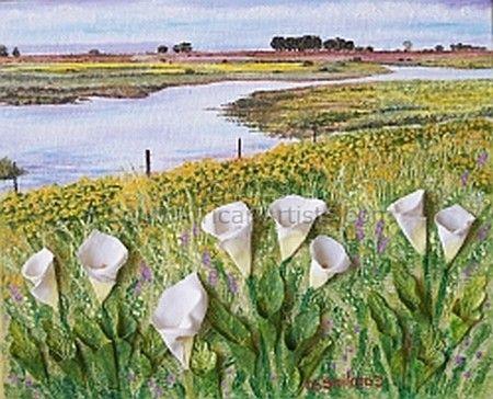 Velddrift lilies
