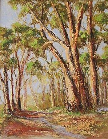 Bluegum Trees
