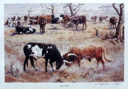 Cattle in Trial of Strength
