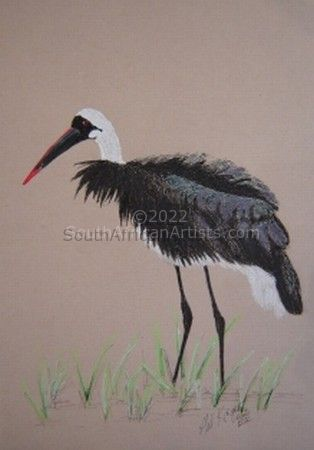 Woolly-Necked Stork 1
