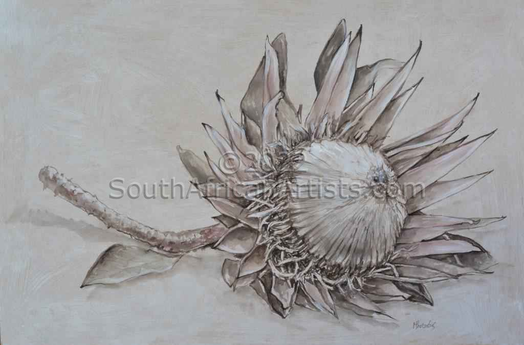 Protea on Table