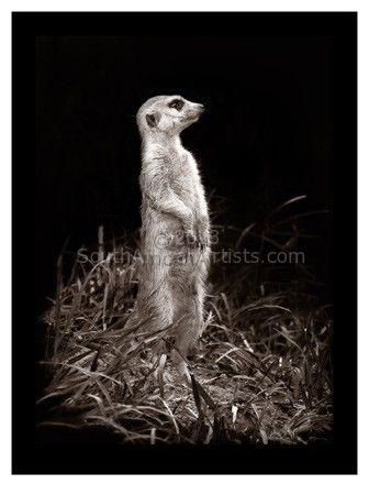 Meerkat Guarding