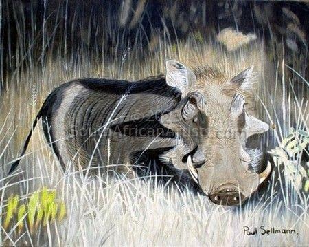 Warthog, Sundowner Time