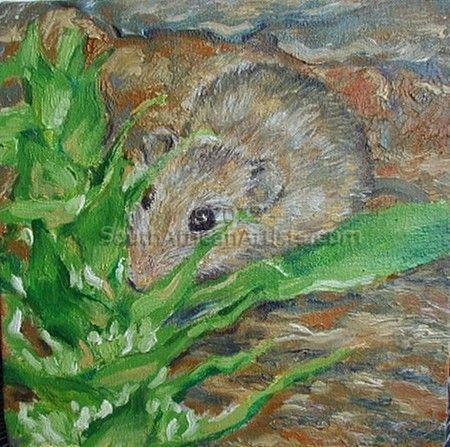 Namaqua mouse