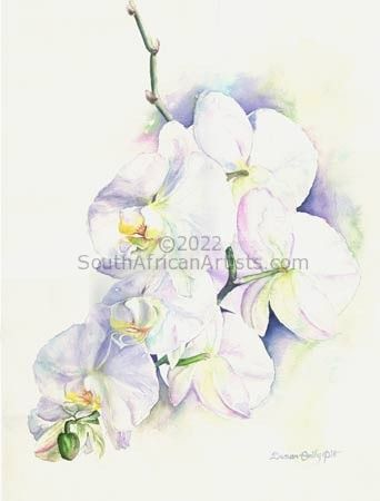 Prchid, Phaelanopsis