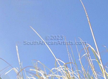 Grass Series 6