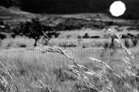 Grasses #1