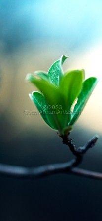 Plantscape #5