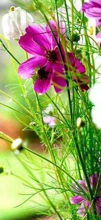 Plantscape #15
