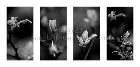 Plant Studies #2