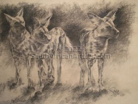 Wild Dog in Charcoal