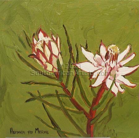Fynbos 58, Protea Ordorata