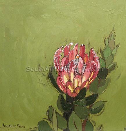 Fynbos 50, Protea Compacta