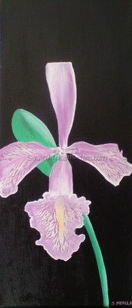Magical Orchid