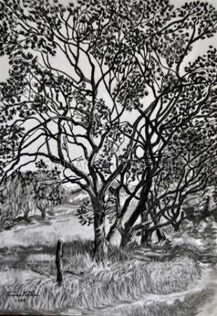 Trees in Wakkerstroom