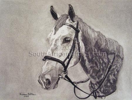 A grey gelding named Centaur