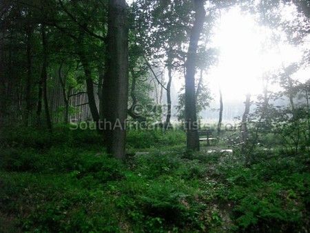 Belgium Forest