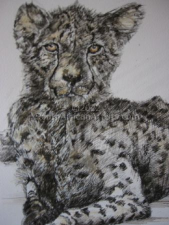 Young Tinted Cheetah