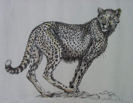 Tinted Pregnant Cheetah