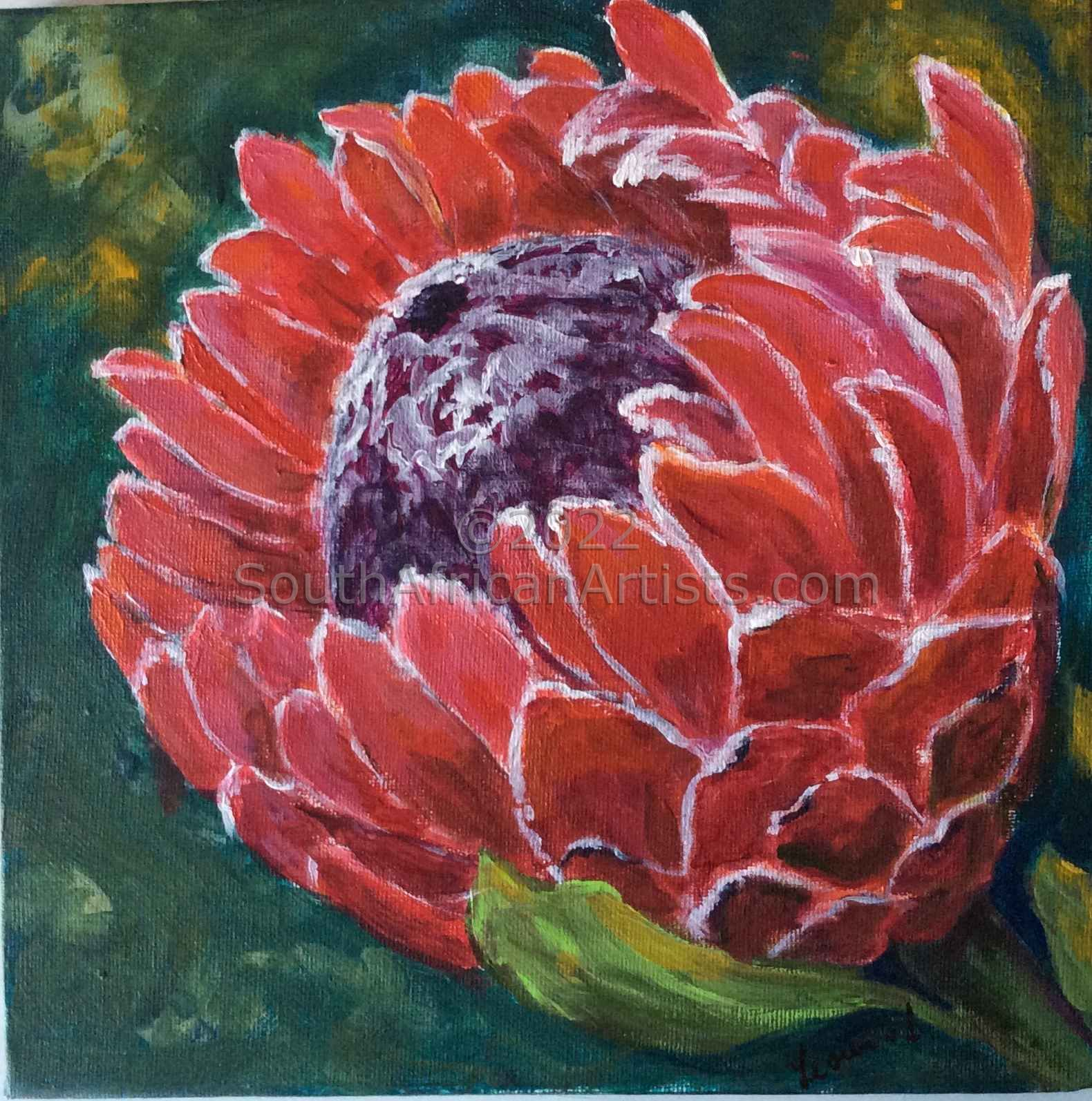 My Protea