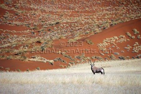 Gemsbuck in Desert