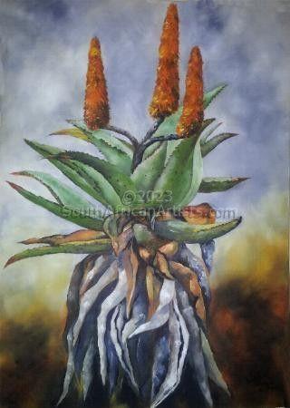 Cape Aloe 2
