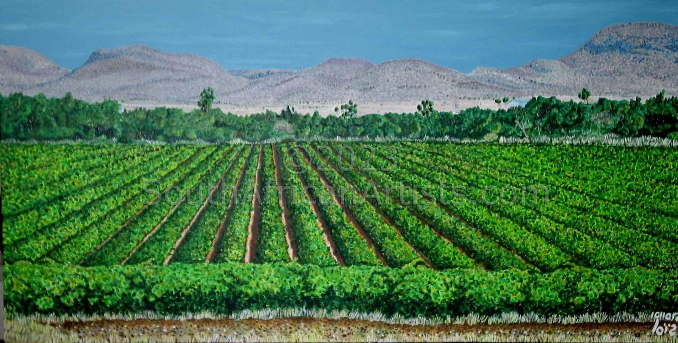 Northern Cape Vineyard