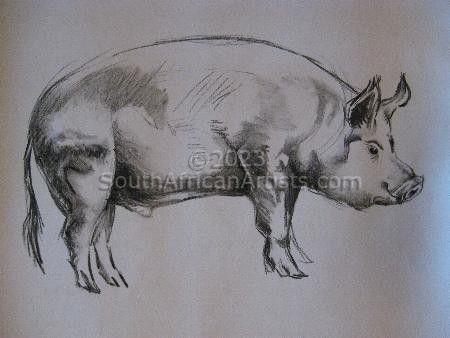 Pig Study 1
