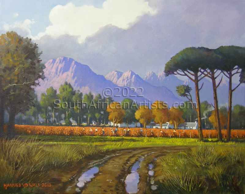 Cape Winelands Early Morning