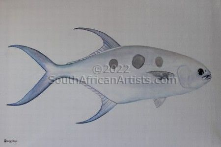 Large Spotted Pompano