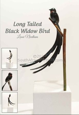 Long Tailed Black Widow Bird
