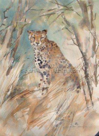 Cheetah at Sontuli