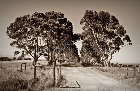Brickyard Road (Sepia)