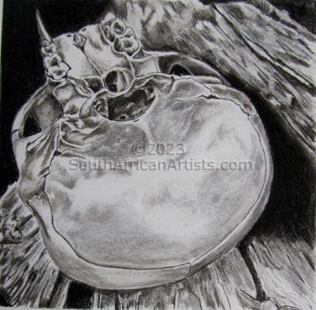 Juvenile Baboon Skull 11